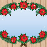 Christmas poinsettia flowers background with pine branches on a wooden background and sky. Stock Images