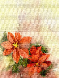 Poinsettia flowers background - watercolor style Royalty Free Stock Photos