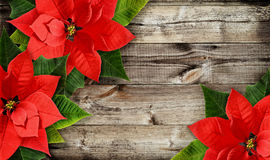 Christmas poinsettia flowers on wood. Christmas poinsettia flowers on old wooden background. Flat lay. Top view Stock Images