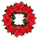 Christmas poinsettia flowers wreath Stock Image