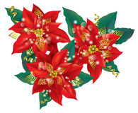 Christmas poinsettia with golden decorations Stock Images