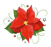 Christmas, poinsettia, holly Royalty Free Stock Photos