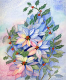 Christmas poinsettia Original Watercolo. Original Watercolor oainting of Christmas poinsettia,holly leaves and berries in an assortment of background and plant Royalty Free Stock Image