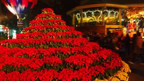 Christmas Poinsettia Tree stock photos