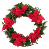 Christmas Poinsettia Wreath. Christmas wreath of poinsettia flower heads with holly, mistletoe, ivy, pine cones and cedar leaf sprigs over white background Stock Image