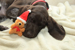 Christmas Pointer Stock Images