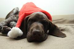 Christmas Pointer Royalty Free Stock Images