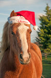 Christmas Pony Stock Photo