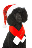 Christmas poodle Stock Photography