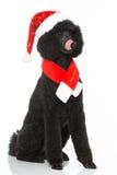Christmas poodle Royalty Free Stock Image