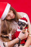 Christmas portrait with cute dog Stock Photo