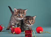 Christmas portrait of cute little kittens. Stock Photo