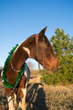 Christmas portrait of a horse stock images