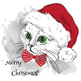 The christmas poster with the image cat portrait in Santa's hat. Vector illustration. Vector illustration. Royalty Free Stock Photography