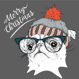 The christmas poster with the image pug portrait in winter hat. Vector illustration. Stock Image