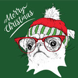 The christmas poster with the image pug portrait in winter hat. Vector illustration. The christmas poster with the image pug portrait in winter hat. Vector Stock Image