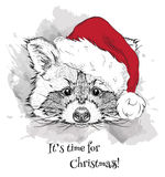 The christmas poster with the image raccoon portrait in Santa's hat. Hand draw vector illustration. Stock Photo