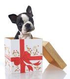 Christmas present royalty free stock photography