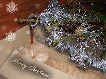 Christmas present. Cat as present under tree Royalty Free Stock Images