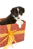 Christmas present puppy Royalty Free Stock Images