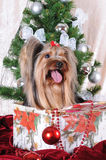 Christmas present under the tree - puppy Stock Photos