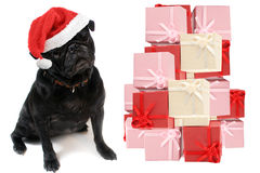 Christmas pug Stock Photography
