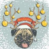 Christmas pug dog Royalty Free Stock Image