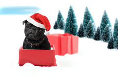 Christmas pug present Royalty Free Stock Photography
