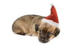 Christmas Pup Royalty Free Stock Photo