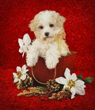 Christmas Puppy. Sweet little Christmas puppy sitting in a basket with Christmas flowers on a red background Stock Image