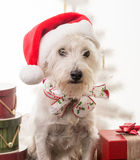 Christmas Puppy Stock Images