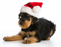Christmas puppy Stock Photography