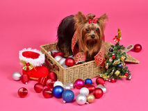 Christmas puppy with balls,new year treegift boot Royalty Free Stock Photography