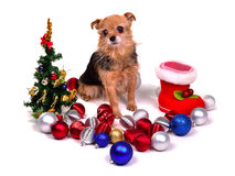 Christmas puppy with colorful decorations Stock Image
