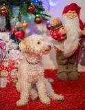 Christmas puppy. Cute little dog with christmas presents  and santa Royalty Free Stock Image