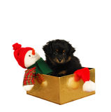Christmas Puppy Dog Stock Image