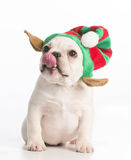 Christmas puppy Royalty Free Stock Photography