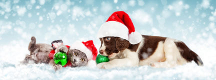 Christmas Puppy and Kitten in Snow. Cute puppy and kitten playing with Christmas ornaments in the snow royalty free stock image