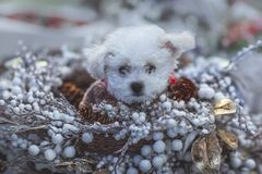 Christmas puppy, New Year decorations. royalty free stock images