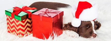 Christmas Puppy With Presents Banner. Cute puppy sleeping next to wrapped presents wearing Santa Claus hat. Sized to fit popular social media cover Stock Photo