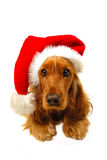 Christmas puppy with Santa hat Stock Photo