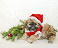 Christmas Puppy in a Santa Suit. Stock Photo