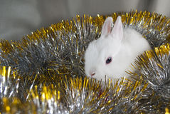 Christmas rabbit Stock Image