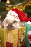 Christmas rabbit Royalty Free Stock Images