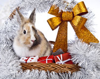 Christmas rabbit. With a christmas basket and gifts Royalty Free Stock Photo