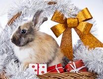 Christmas rabbit. With a christmas basket and gifts Stock Image