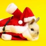 Christmas cute rabbit. Christmas rabbit. Celebrate holiday with Christmas bunny Stock Images