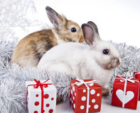 Christmas rabbit. With a christmas decorations and gifts Stock Photo