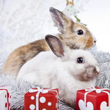 Christmas rabbit. With a christmas decorations and gifts Stock Photos