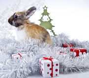 Christmas rabbit. With a christmas decorations and gifts Royalty Free Stock Images